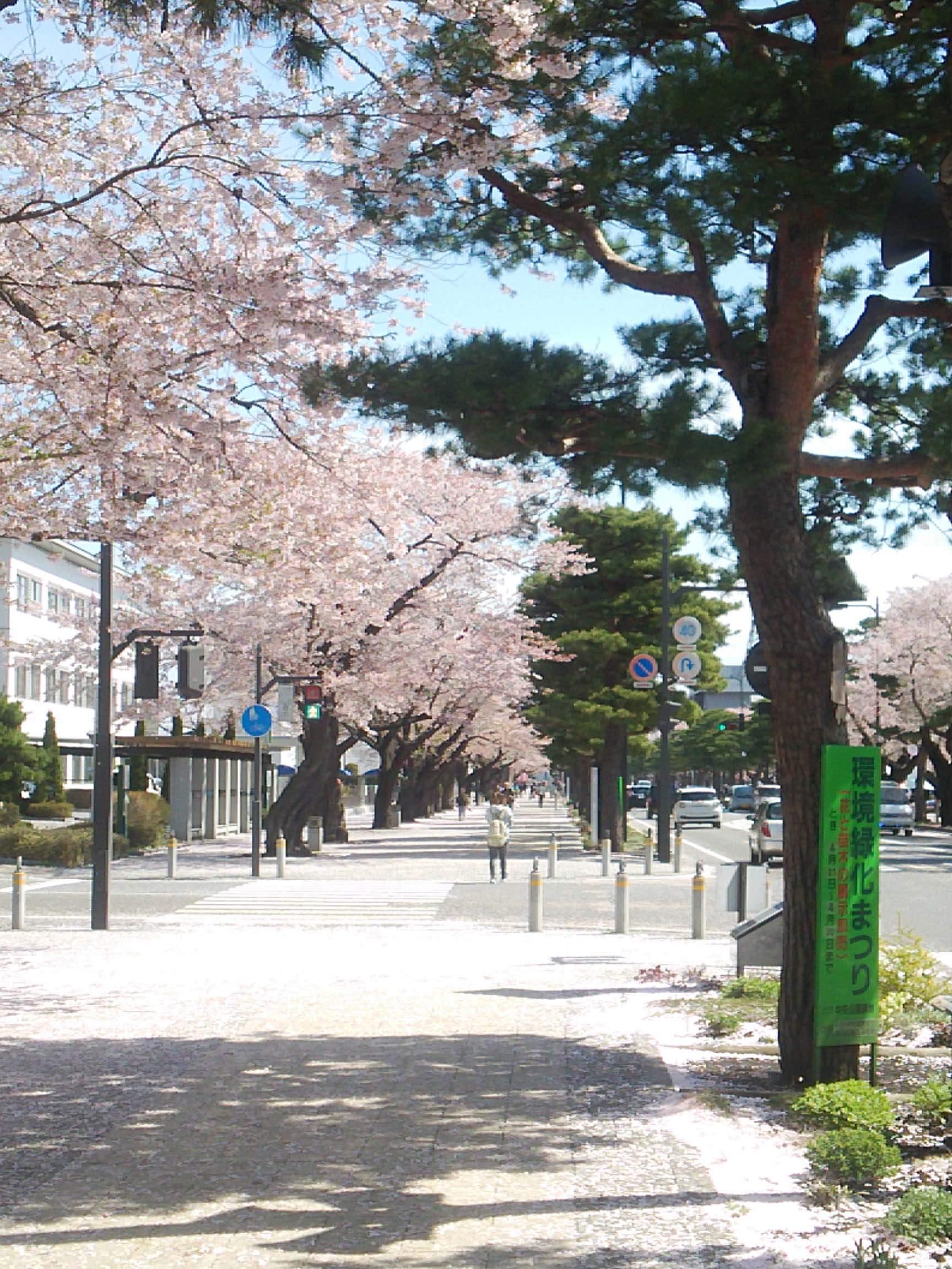 十和田市桜情報